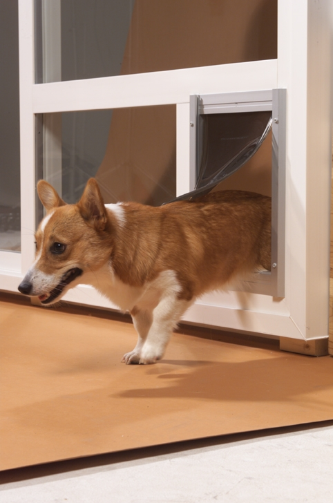 cd-doggie-door.jpg